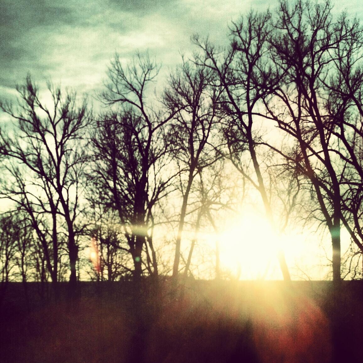 sun trees